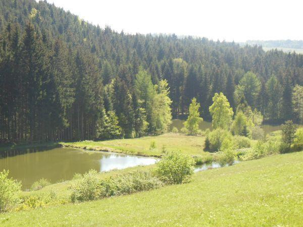La Vigotte, Vosges - photo #21