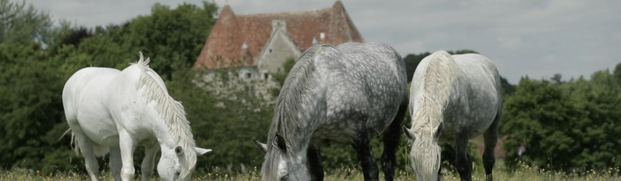 Percherons cphoto Publicam Productions