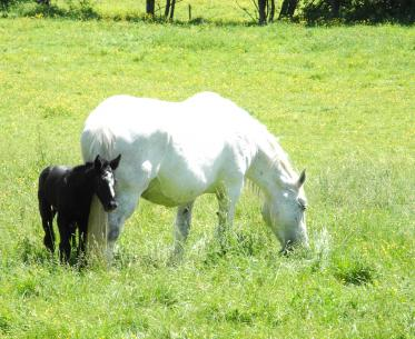 cheval-percheron-perche Toursime 28